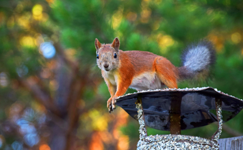 Common Animals To Invade Chimneys