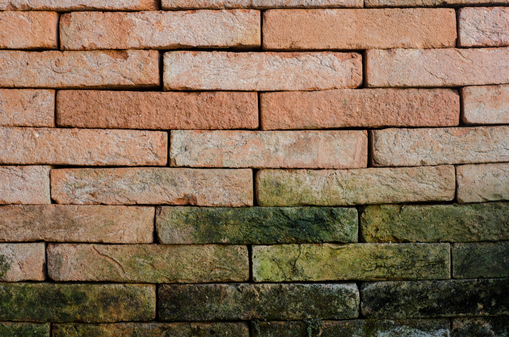 Prevent mold growth when you care for your chimney in Panama City
